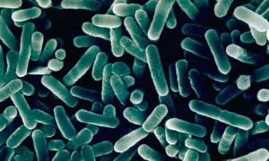 Legionella baktérium